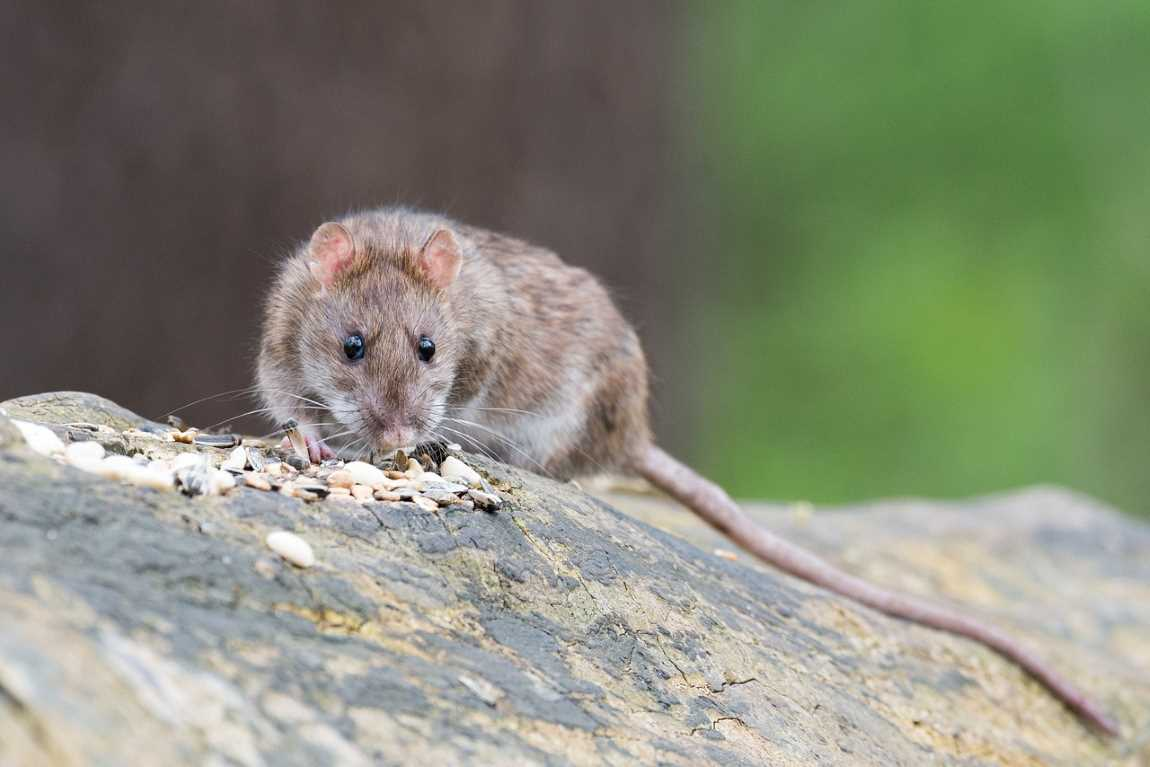 Five Great Tips On Protecting Your Home From Pests