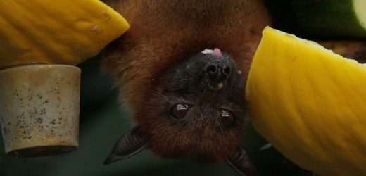 Getting Rid Of Bats In Your Property – Calling The Pros
